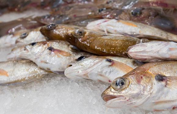 Peixeria Casmi peixes e mariscos da ría