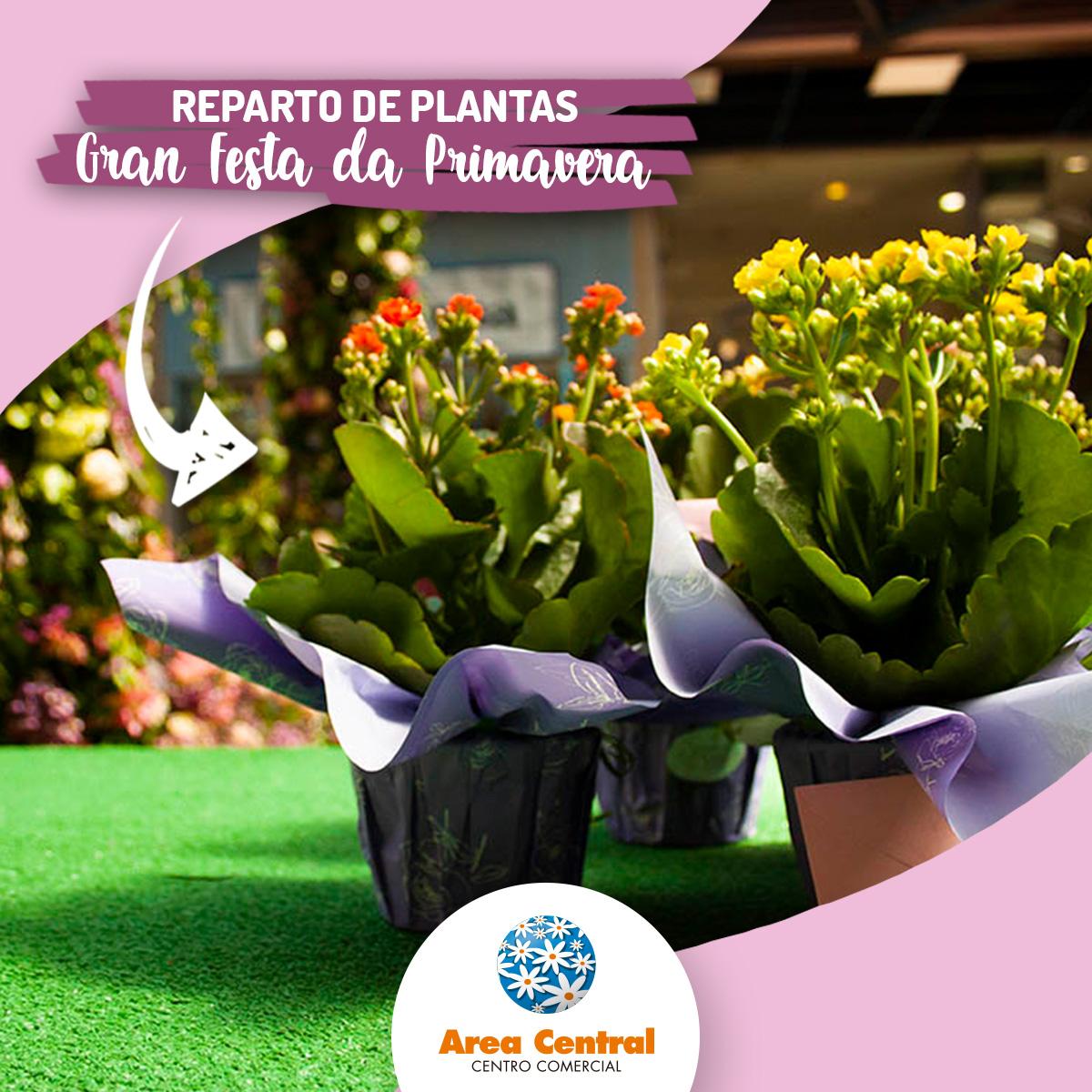 """DINÁMICA DA PROMOCIÓN """"REPARTO DE PLANTAS EN FLOR"""" DA GRAN FESTA DA PRIMAVERA DE ÁREA CENTRAL"""
